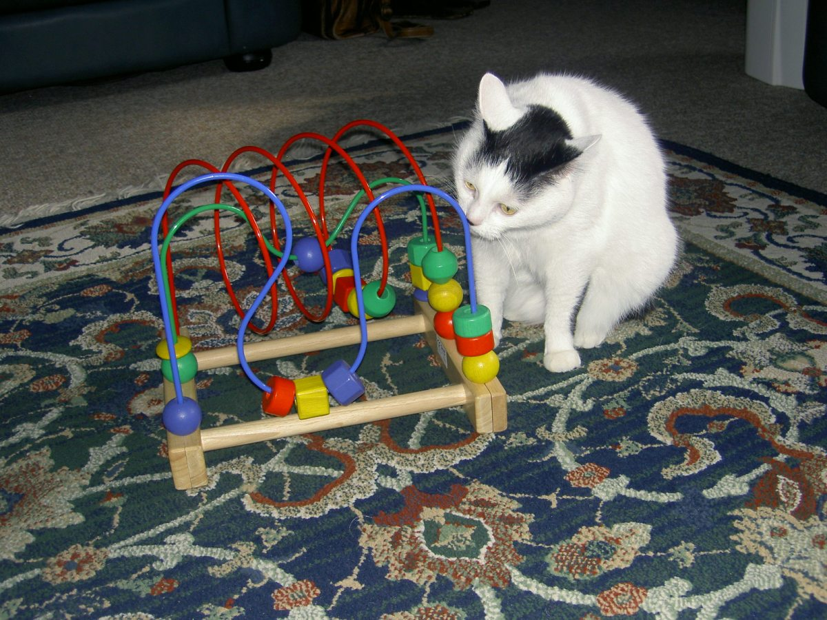 Joy the Cat inspecting alien technology.