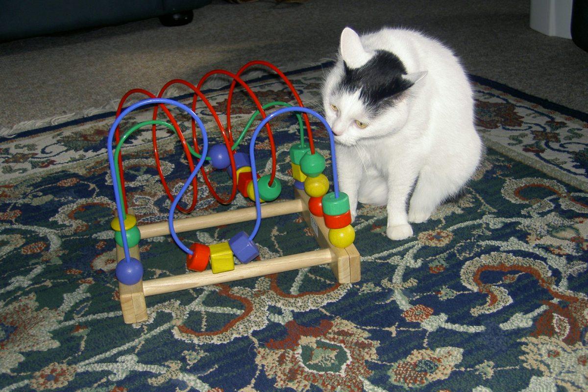 Joy the Cat inspecting alien technology.