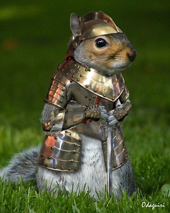 armored-squirrel-2