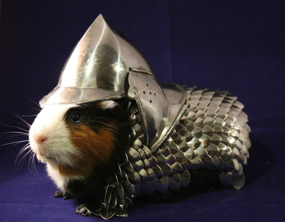 guinea-pig-armor